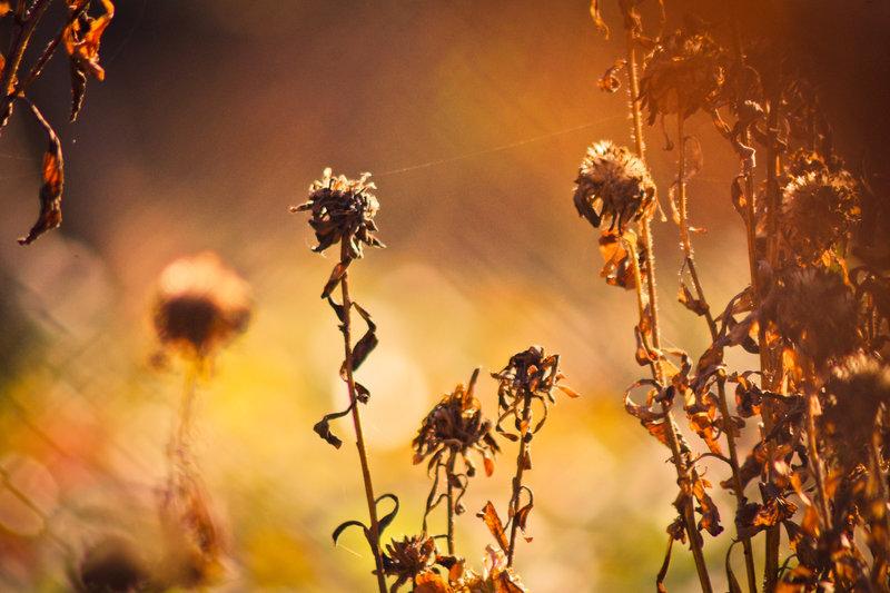 Autumn - Day 2