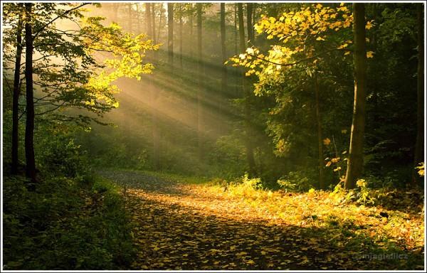 Fall breathe