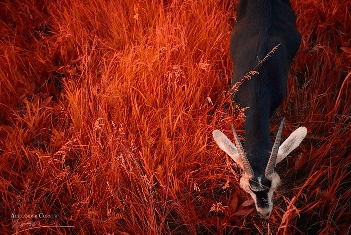 On The Autumn Grass