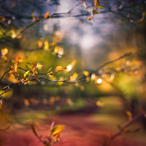 shroud of fall