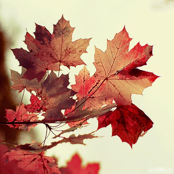 the magic of autumn.